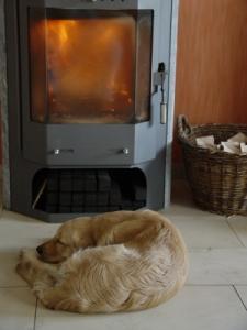 Hund schläft vorm Kamin
