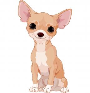 kleine Hunderassen Chihuahua