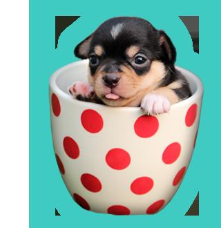 Hundehoele.net
