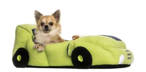 Hund im Hundebett, welches aussieht wie ein Auto